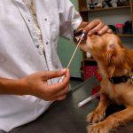 A quoi sert le test adn d'un chien?